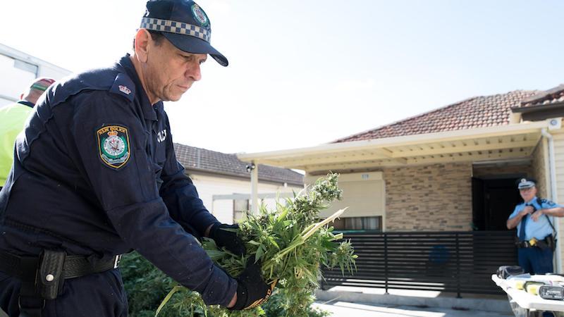 Marijuana Legality Australia
