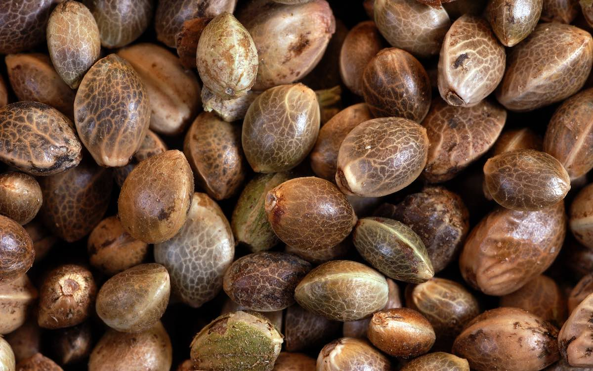 Cannabis Hemp Seeds Australia